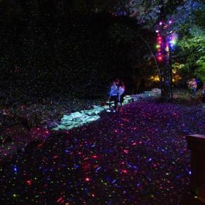 夜幕下的魔法森林:景物与灯光完美结合