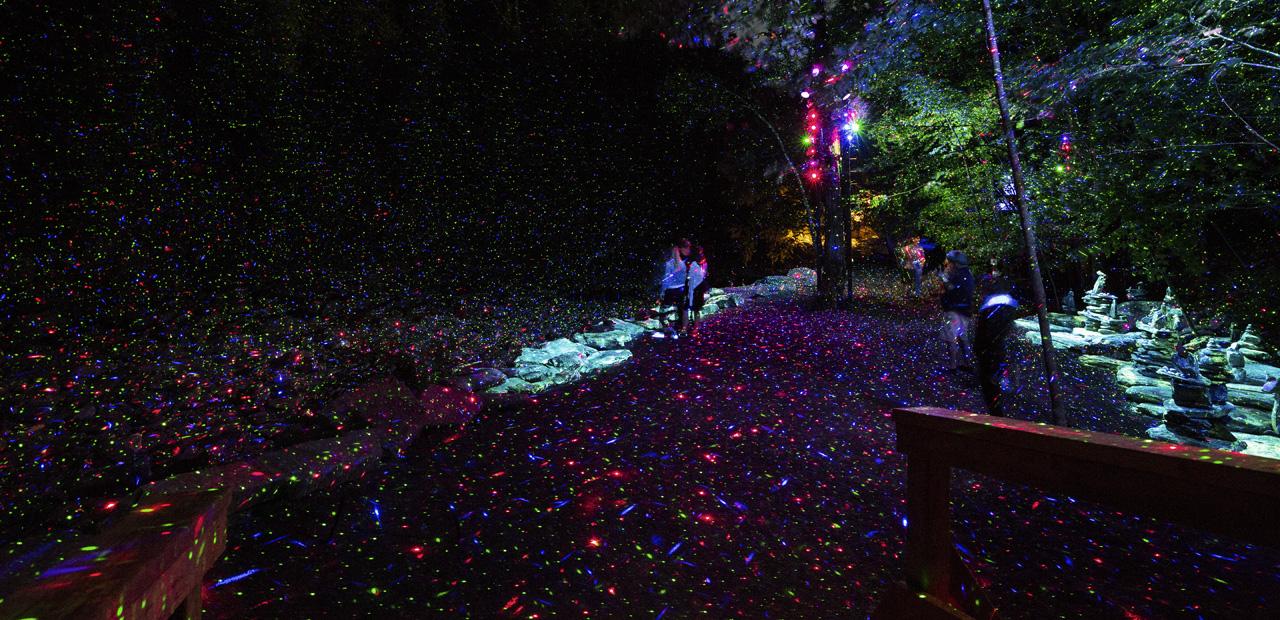 01-foresta-lumina