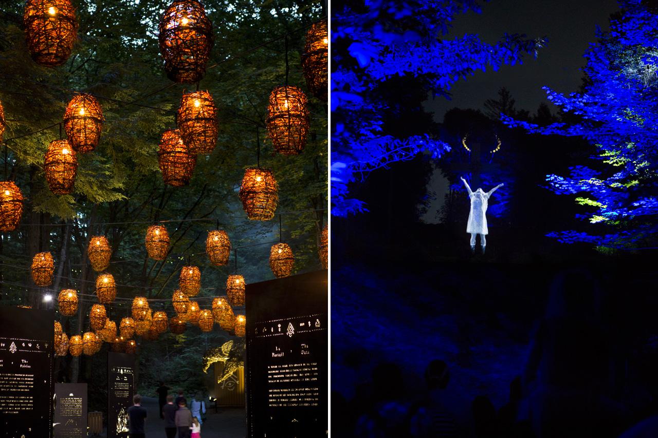 02-foresta-lumina