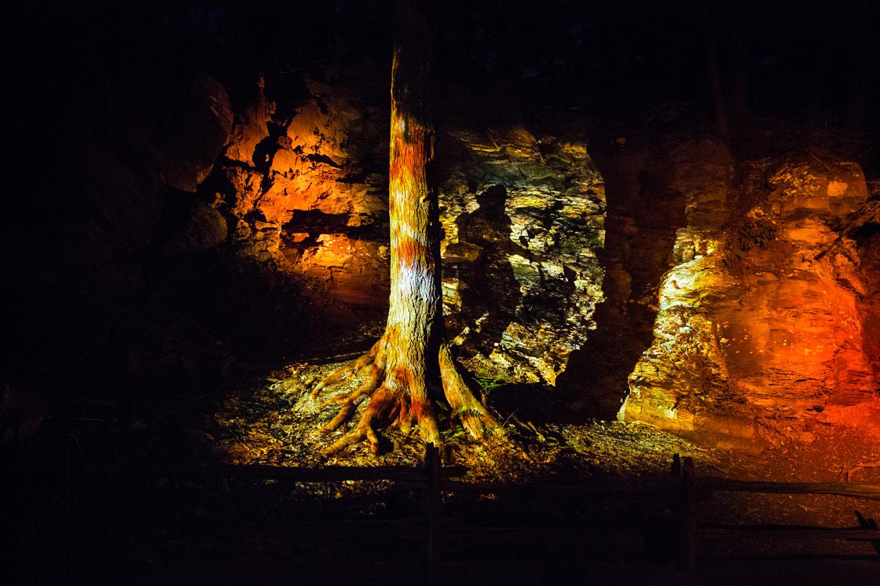 03-foresta-lumina