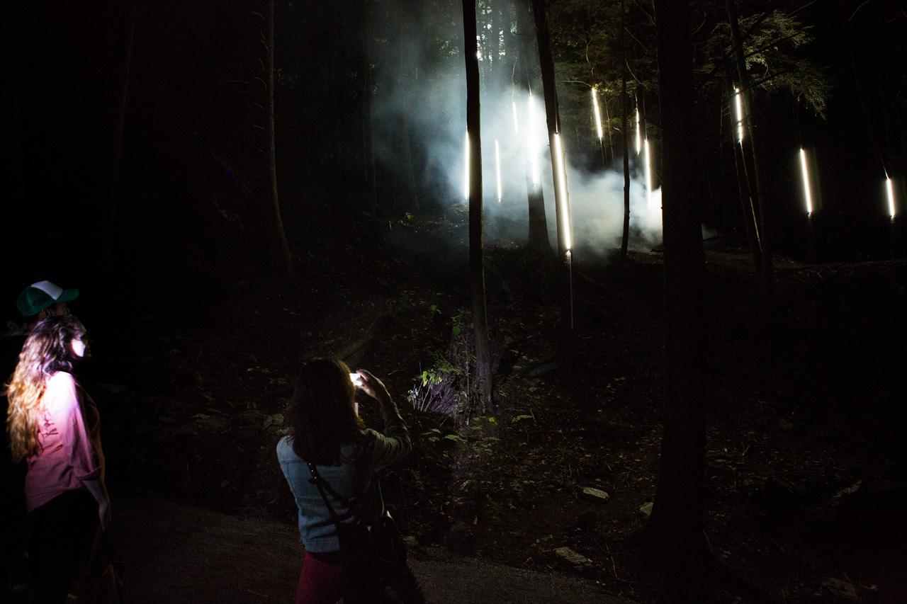 04-foresta-lumina