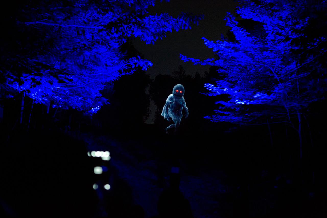 10-foresta-lumina