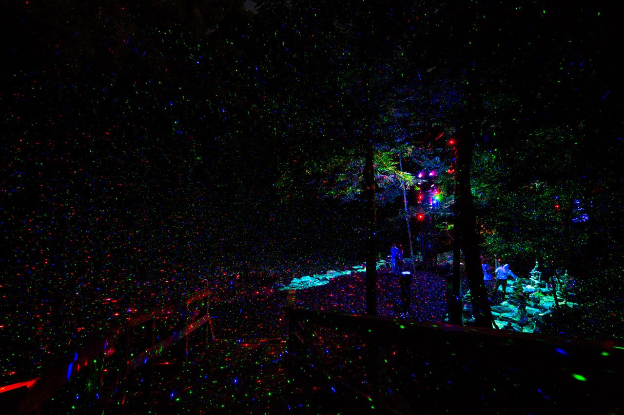 11-foresta-lumina