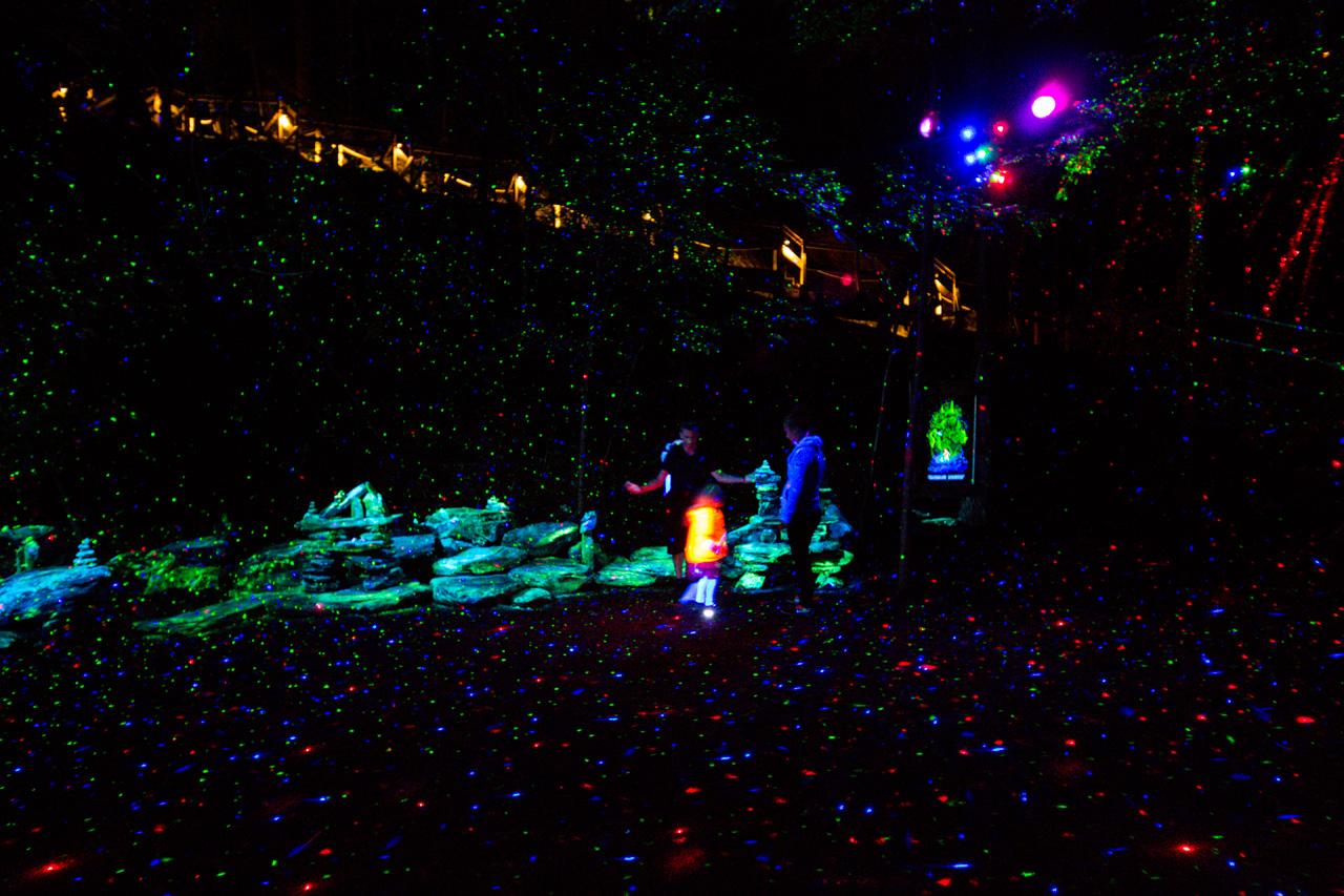 13-foresta-lumina