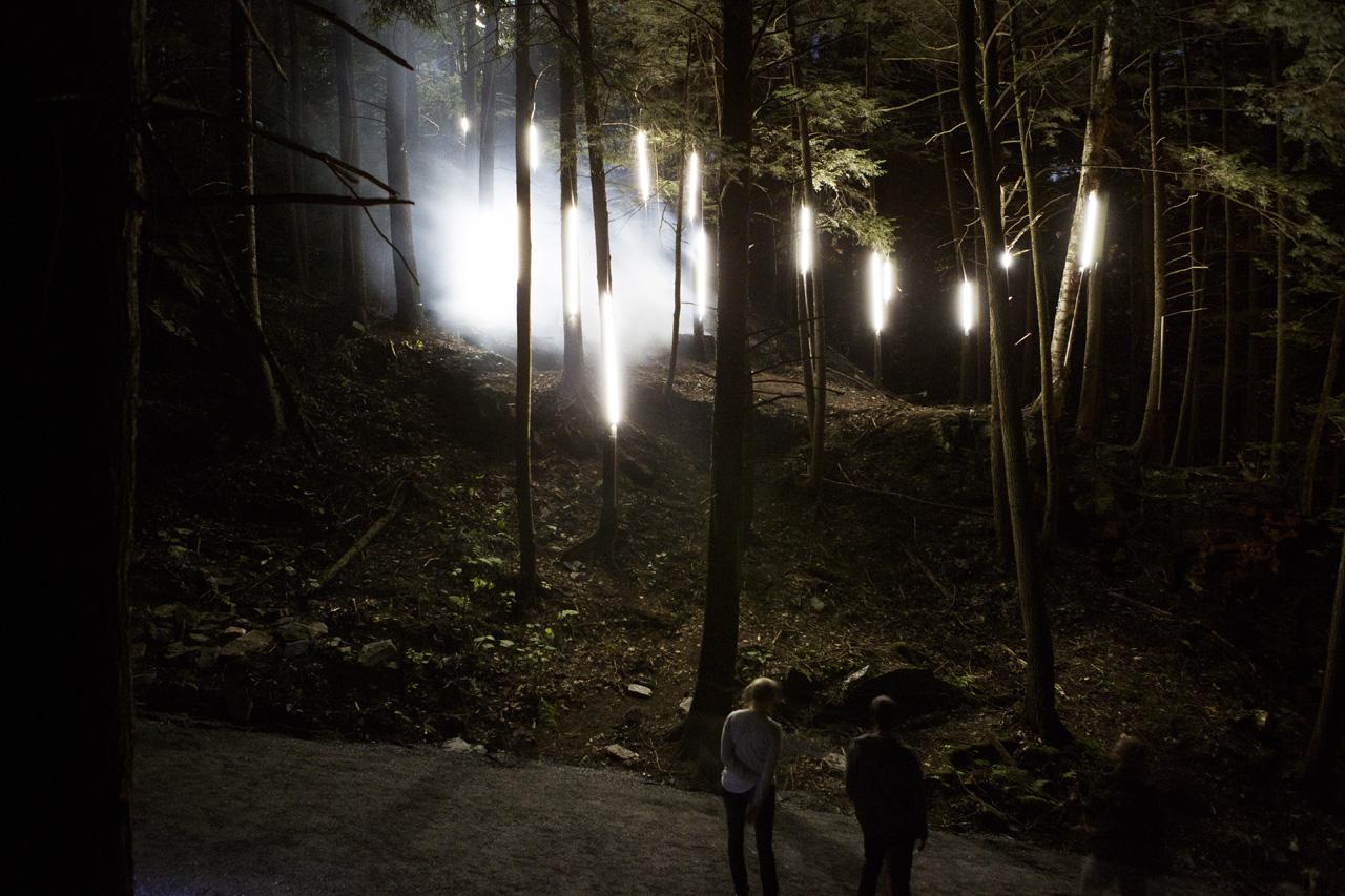 14-foresta-lumina