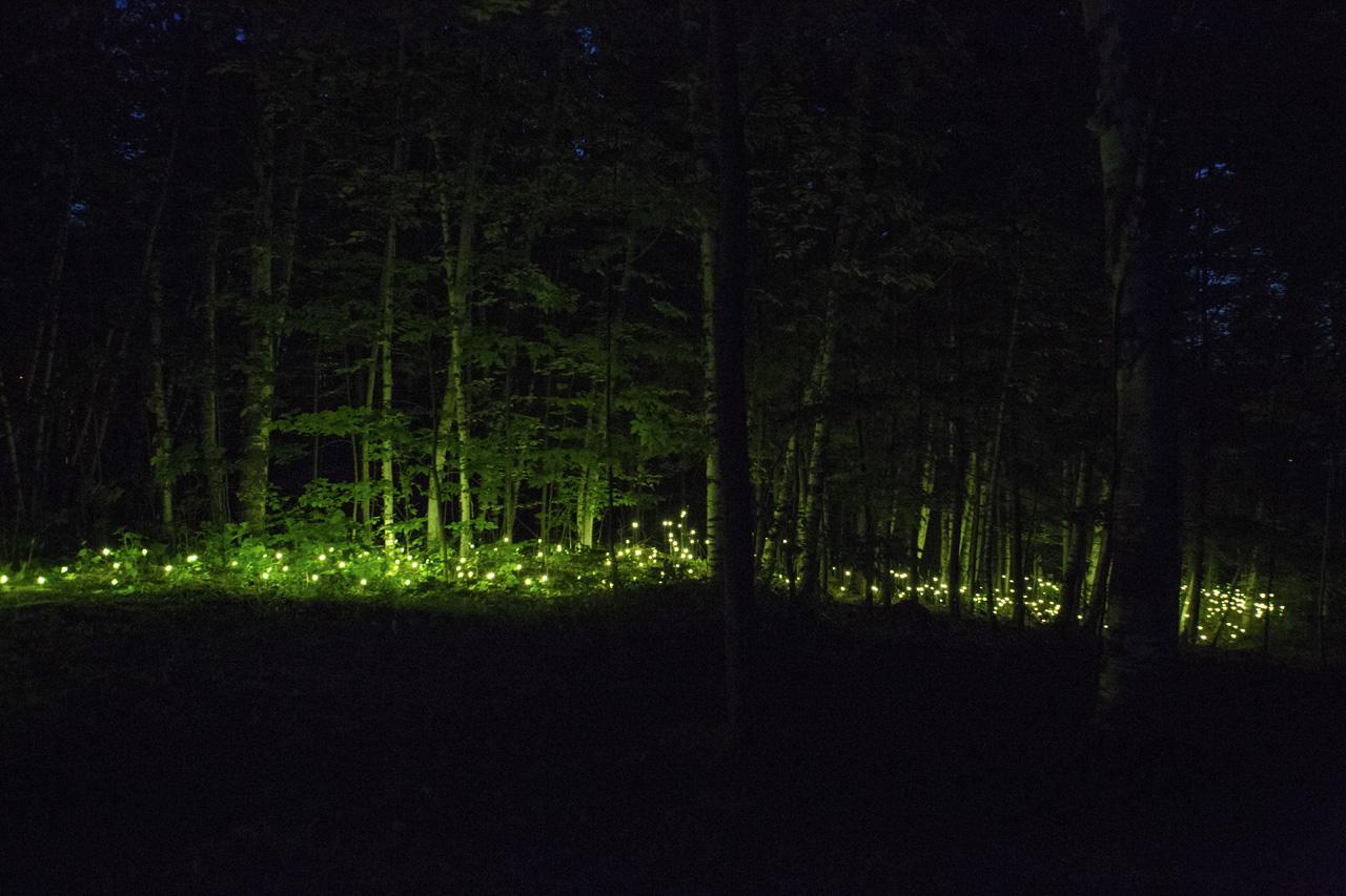 16-foresta-lumina