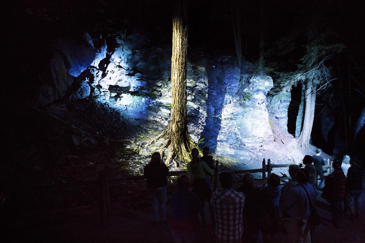 17-foresta-lumina