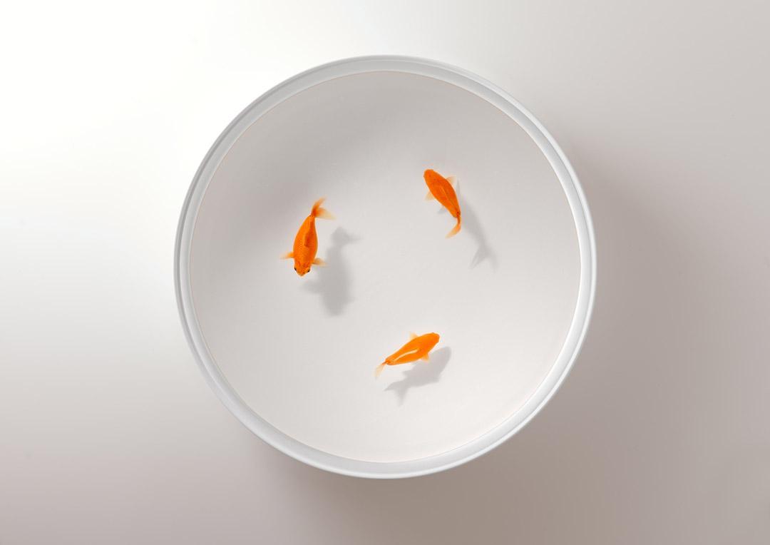 极简主义的金鱼桌