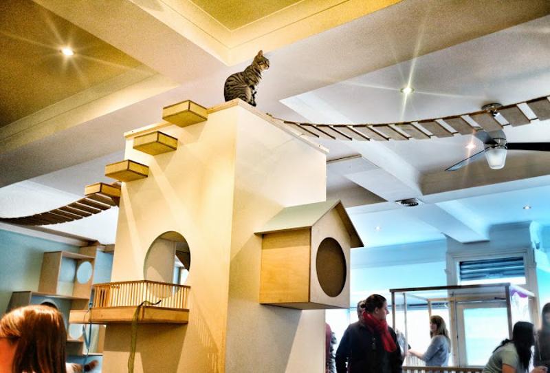 MaisonDeMoggy-Cat-Cafe-hisheji (1)