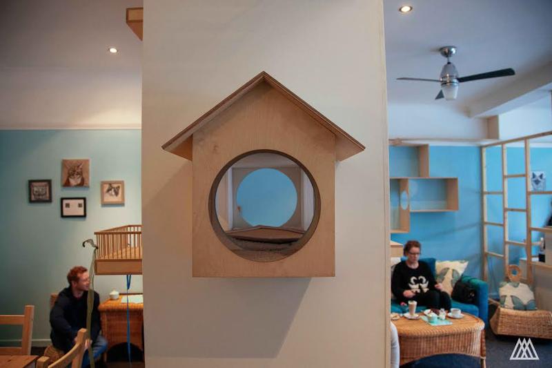MaisonDeMoggy-Cat-Cafe-hisheji (6)
