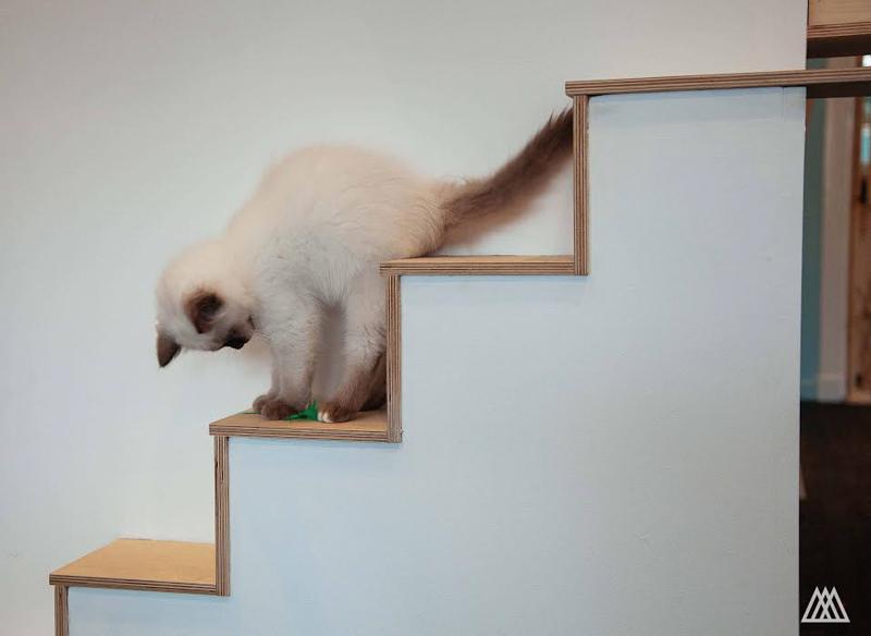MaisonDeMoggy-Cat-Cafe-hisheji (9)