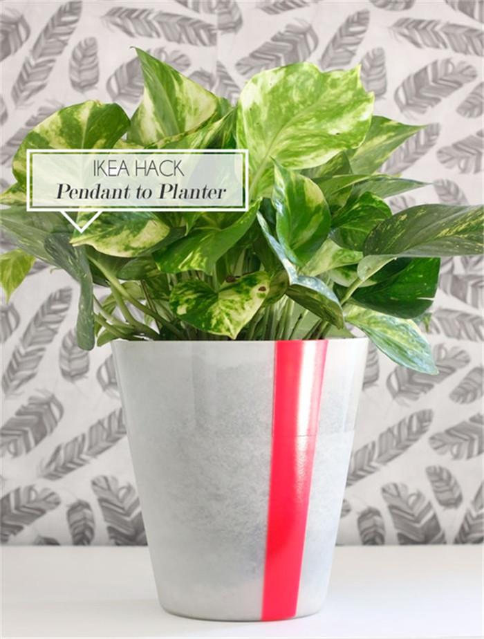 planter-hisheji (10)