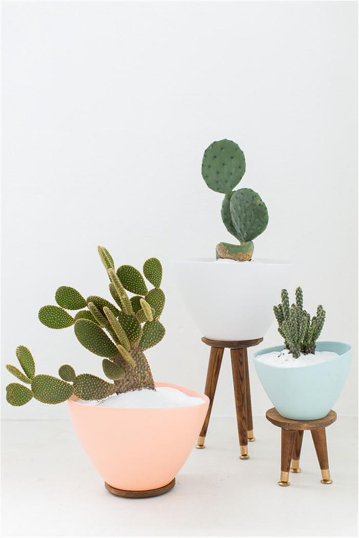 planter-hisheji (2)