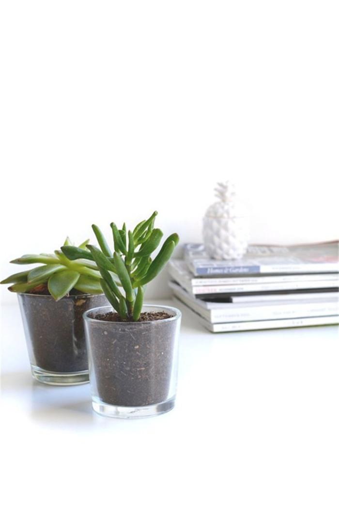 planter-hisheji (5)