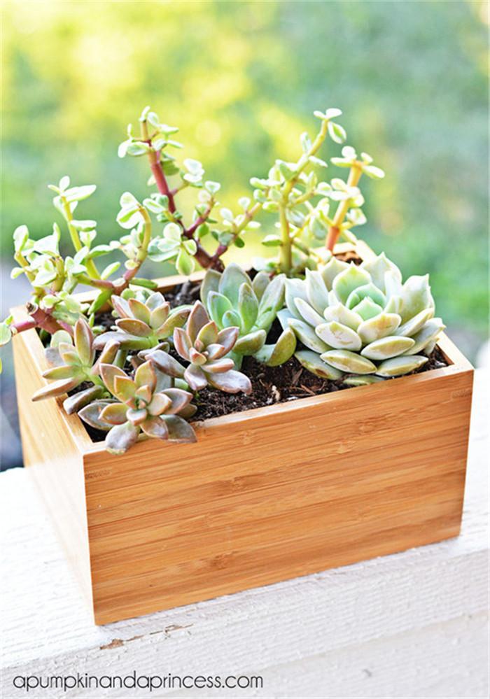 planter-hisheji (9)