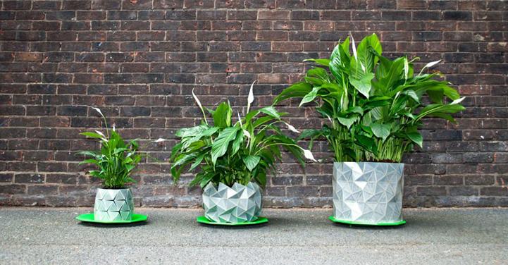 growth-planter-hisheji (1)