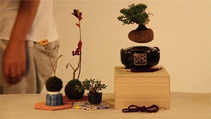Hoshinchu-air-bonsai-hisheji (2)