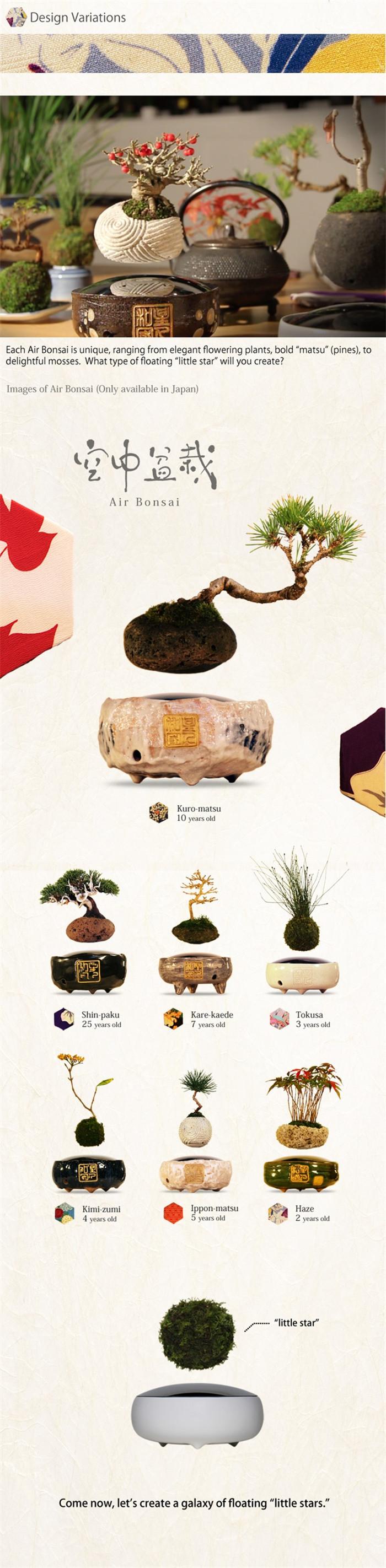 Hoshinchu-air-bonsai-hisheji (4)