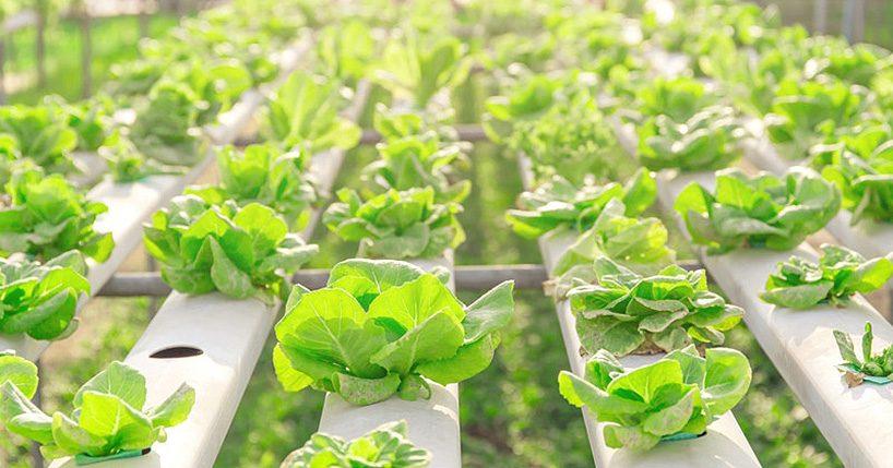 exsilio-oy-eko-farmer-city-farming-module-designboom-06-27-2017-818-007-818x429