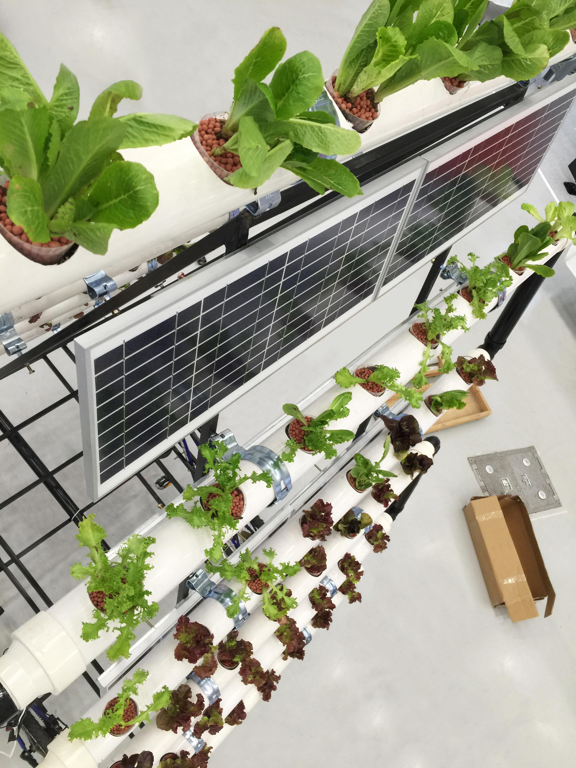 hydroponic farm2