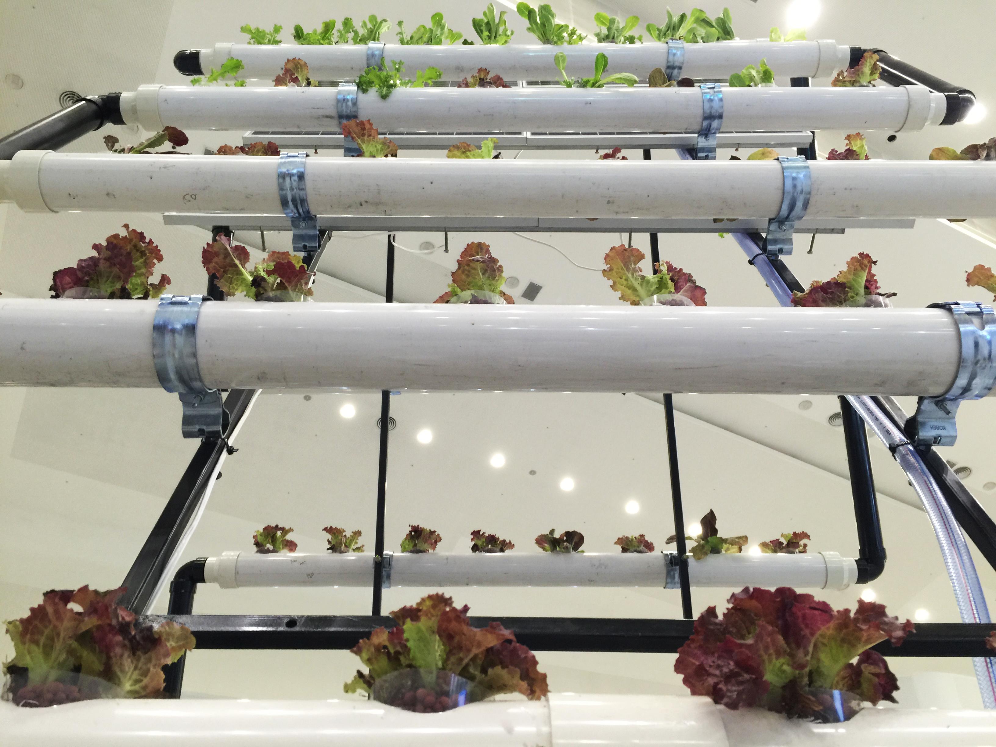 hydroponic farm3