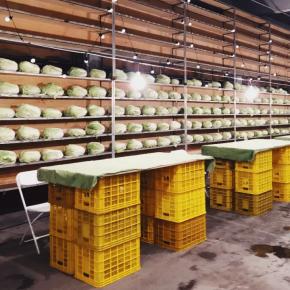 西安这个菜市场因1000棵白菜成为网红,如今却……