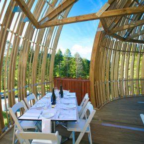 在40米高的镂空树屋上用餐是一种什么体验?