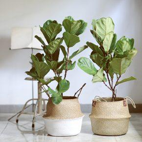 咖啡店最具文艺气质的绿植与水泥花盆
